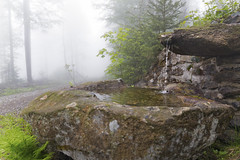 Pure Water (memories-in-motion) Tags: water drops pure source forest fog mood tree moss green flow bayerischerwald by wasser aqua stone mystic