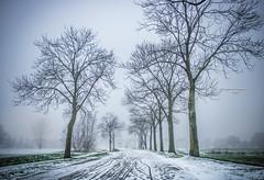 Blanketed by snow (Ingeborg Ruyken) Tags: sneeuw morning empel 500pxs mist empelsedijk natuurfotografie fog instagram ochtend flickr snow