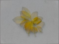 drei zwei g (fdfotografie) Tags: flora pflanze blatt blätter zweig blätterzweig gelb welk abgefallen outdoor tageslicht mehrfachbelichtung nahaufnahme edelkompakte lx100 farbfoto querformat