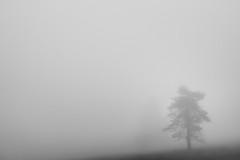 Trees in the Fog: Solitude (Pascal Riemann) Tags: hochheide deutschland baum pflanze sauerland nebel minimalistisch sw natur niedersfeld germany nature schwarzweis bw blackandwhite einfarbig minimalistic monochrome plant