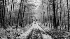 Let it Snow (Tom Levold (www.levold.de/photosphere)) Tags: bw köln königsforst forest wald d7000 nikon bäume wood snow trees sw schnee cologne