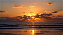 L'écran qui ne déçoit jamais (Phoebus58) Tags: olympus bretagne brittany treguennec coucherdesoleil sunset