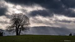 1__.jpg (Nu Mero) Tags: nuage arbre paysage montagne valléedevillé nature breitenau hautrhin france fr