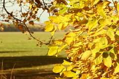 Осень в кадре / Autumn in the frame (Владимир-61) Tags: осень октябрь природа лист листва дерево зеленый желтый autumn october nature leaf foliage tree green yellow sony ilca68 minolta28135
