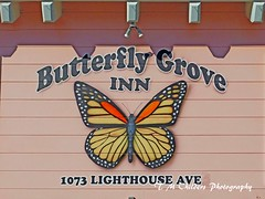 Butterfly Grove Inn (F R Childers Photography) Tags: monterey california montereycalifornia pacificgrove californiacoast montereycoast nikon nikoncamera