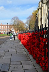 We Will Remember Them (hapsnaps) Tags: hapsnaps 2018 winter hampshire winchester winchestercathedral railings poppies display onehundredyears worldwarone worldwartwo armisticeday remembrance red november