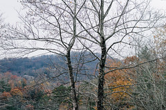 (heremptynest) Tags: nature landscape 50mm canon northgeorgia northamerica fall november trees winter forest moody