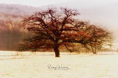 Tree (r.wacknitz) Tags: tree november frost morninglight nikcollection luminar18 nikond7200 nikkor niedersachsen harzvorland