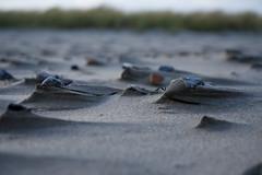 Strand (stephanarp339) Tags: ostsee ostseeküste sand wind steine seesand