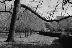 University of Virginia (davekrovetz) Tags: monochrome uva charlottesville virginia pentax k70 pentaxk70 autumn universityofvirginia