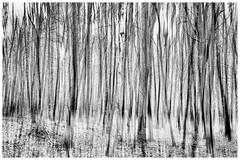 Woods, Wine, Whisky... (Ody on the mount) Tags: abstrakt anlässe bäume em5ii fototour kunst mzuiko918 omd olympus pflanzen schwäbischealb wald abstract art bw forest icm monochrome multiexposure sw woods