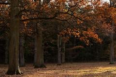 Indian Summer III (picsessionphotoarts) Tags: planetearth flickrnature nikond750 nikon landschaft landschaftsfotografie landscapephotography bayern bavaria deutschland germany nikonphotography nikonfotografie herbst autumn middlefranconia mittelfranken frankenhöhe indiansummer nachmittagssone afternoonsun festbrennweite primelens afsnikkor85mmf18g