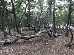 Trollskogen, Öland 8