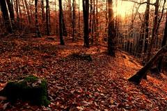 Herbstlicher Steigerwald (Klaus R. aus O.) Tags: wald sonne steigerwald wandern erholung baum herbst laub bunt