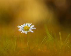 Autumn and flower ... (Julie Greg) Tags: flower nature nautre grass park colours canon autumn autumn2018 england kent