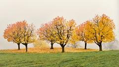 Herbst geht zu Ende (andreas.thomet) Tags: kirschen