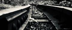 Rail Reunion (Professor Bop) Tags: professorbop drjazz olympusem1 newyorkcity nyc manhattan highline blackandwhite bw rail railroad railway park linearpark urban railroadties mosca