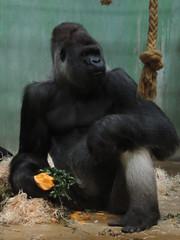 Wendynkkl. Diergaarde Blijdorp - Rotterdam Zoo 25-11-2018 (wendy.nkkl.) Tags: blijdorp diergaarde bokito