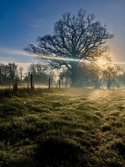 """On a frosty morning..."" (RF-Edin) Tags: life sun tree frost mist"