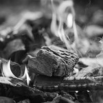 2018.12.08_342/365 - In the Еnd Everything Will Be Ashes... thumbnail