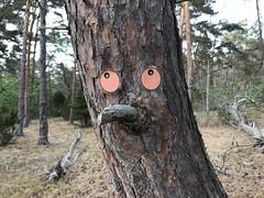 Trollskogen, Öland 18