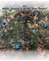 Merry Christmas & Happy New Year! (Melinda * Young) Tags: greetings fdsflickrtoys bighugelabs christmas tree ornaments blue redwood california woods evergreen holidays merrychristmas happynewyear flickrfriends card 2018 season