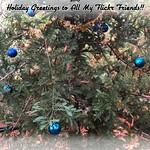 Merry Christmas & Happy New Year! thumbnail