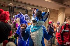 IMG_0533-7 (StevenJPaul) Tags: saphifox midwest furfest 2018 furry fandom fursuit chicago hyatt ohare
