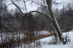 Talv (Jaan Keinaste) Tags: pentax k3 pentaxk3 eesti estonia loodus nature jüriterviserada talv winter puu tree mets forest