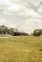 D3 639 and K184 on Special at Mileage 61M 4C (oz_lightning) Tags: 35mmslrcamera 35mmfilmcamera australia canonpixmamg8150 filmscan hanimexcs50 tooborac vic yashicaj3 yashinon50mmf2lens film passenger railways rural scan sky slide special steam tracks trains victoria aus