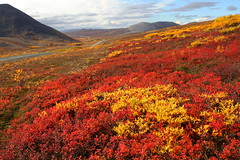 Fall Colors on the Tundra (gainesp2003) Tags: red gold fall colors autumn tundra council highway road nome alaska september landscape wilderness nature