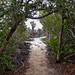 De manglares a opuntias