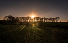 Tree line (Phil-Gregory) Tags: nikon d7200 tokina1120mmatx tokina countryside scenicsnotjustlandscapes sunset sunstar sunburst sunshine mossvalley wideangle ultrawide sheffield mosborough ridgeway
