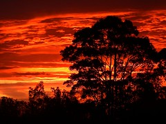 More hot weather (Explored) (elphweb) Tags: sunset silhouette tree trees forest bush wood woods sky skies cloud clouds colourful colour colorful color colourfulsky