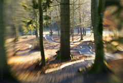 """The long and winding road...."" (Elisafox22) Tags: elisafox22 sony nex6 lensbaby composerpro 50mm optic doubleglass fyvie fyviecastle trees path wood treetrunks light shadows loch bokeh dof sunshine aberdeenshire scotland outdoors elisaliddell©2019 tmt htt hbw bokehwednesday treemendoustuesday texturaltuesday"