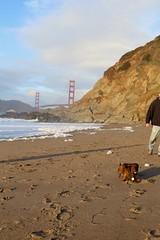 Shy dog passing me on Baker Beach (daveynin) Tags: shore shoreline pacificocean ocean beach nps california goldengatebridge bridge bay dog sand