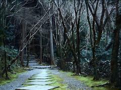 Paths of Kyoto (lebre.jaime) Tags: japan kyoto 京都 高山寺 takayma temple mountainpath path wall stone moth stair kodak ektachrome epd