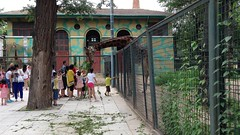"""china-zoo-2014-photo-jul-08-10-27-14-pm_14461020578_o_40485914060_o • <a style=""""font-size:0.8em;"""" href=""""http://www.flickr.com/photos/109120354@N07/46177701731/"""" target=""""_blank"""">View on Flickr</a>"""