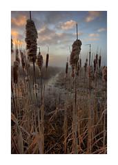 Sunrise Waterdonken Breda 08 (cees van gastel) Tags: ceesvangastel canoneos550d clouds sigma1020mm landscape landschap luchten natuur nature nederland netherlands noordbrabant breda water winter waterdonkenbreda waterakkers wolken sunrise zonsopkomst mist horizon einder