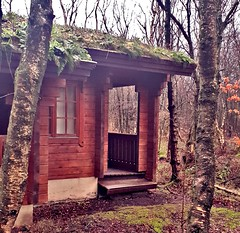 A really nice lil place to stay with zero phone signal / intetnet data (R1GHT 4NGLE Photography) Tags: samsung streetphotography hello live style flickrpic photoworld photooftheday like love sky leaves forest tree forrest s9 samsungs9 phonephotography photographer glasgow park country chevin otley r1ght4ngle grass ferns green woods cabin log logcabin