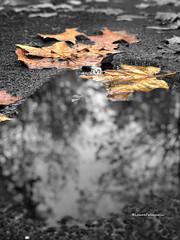 @autunno (falcinellilaura2) Tags: autunno autumn autunno2018 autumn2018 autumnweather autumn4igers autumnday autumndays autumnlove loveautumn iloveautumn autumncolors autumncolours autumnal autumntime autumnmood autumnishere autumnvibes autumnsky autumnseason autumnobsessed autumninstagram autumnaccount fall instafall fallintoautumn fallweather fallmood fallmorning fallmornings fallvibes fallseason fallaccount falldays fallcolors fallobsessed season seasons newseason seasonal rainydays weheartautumn almostwinter
