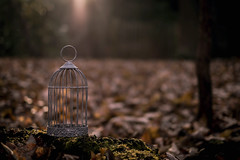 Free (V Photography and Art) Tags: birdcage backlit