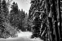 Tief verschneiter Waldweg (Helmut Reichelt) Tags: bw sw baum wald weg verschneit schnee unberührt tief schwaigwall geretsried bayern bavaria deutschland germany winter januar leica leicam typ240 captureone12 silverefexpro2 leicasummilux50mmf14asph