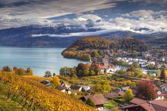 Autumn in the Oberland (hapulcu) Tags: bern ch helvetia herbst isvicre schweiz spiez suisse suiza suiça sveits svizzera switzerland zvicer automne autumn autunno otoño toamna vignoble vineyard švicarska