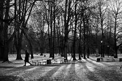 Winter walk (michael.mu) Tags: 50mm leica poland summicron warsaw warszawa snow street winter leicaaposummicronm50mmf2 ogródsaski saxongardens bw blackandwhite silverefexpro streetphotography