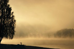 more golden fog (EllaH52) Tags: winter water river fog light sun tree trees mist snow scenery nature minimalism