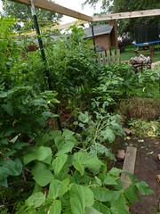 P1090105 (LPompey) Tags: garden strawbale strawbalegarden kohlrabi gardening greenbeans tomatoes peppers