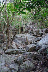 DSC_3842 (sch0705) Tags: hk hiking stream kowloonpeak kowloonpeakhinterland kowloonpeakhinterlandstream