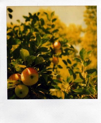 Fruit blog pestvetegkont omercomar